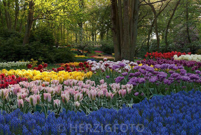 Photo Tulpenbeete By Tina Horst Herzig Photography Kleiner Garten Alpine Pflanzen Privatgarten
