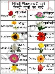 Image Result For Flowers And Names With Pictures Flower Chart Hindi Language Learning Hindi Alphabet