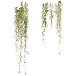 image result for spanish moss watercolor tatum wedding in 2018