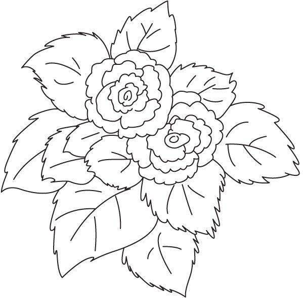 Pink Flower Begonia Coloring Page With Images Pink Flowers