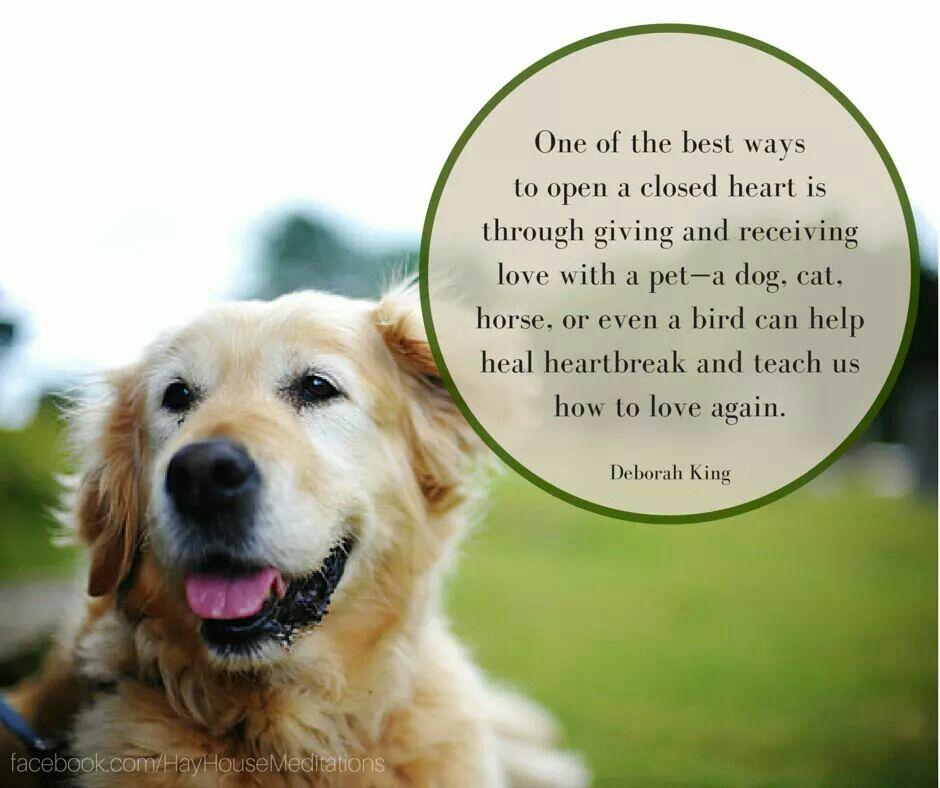I agree Most popular dog breeds, Dogs, Senior dog