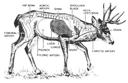 Click This Image To Show The Full Size Version Deer Pinterest