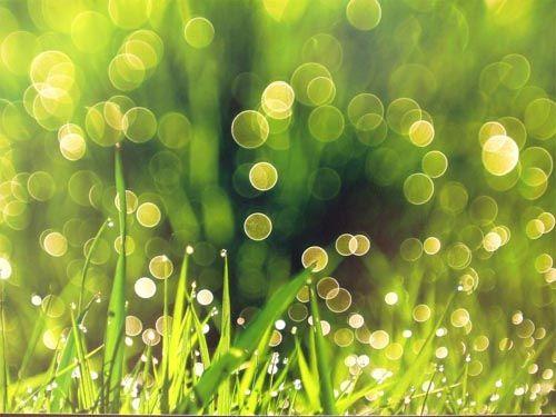 #grass
