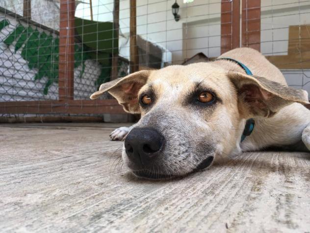 Adopt Oscar on Rescue dogs, Adoption, Whippet mix