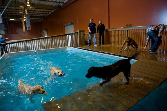 Indoor pool for dogs | Dog Sanctuary Ideas | Dog hotel, Dog ...