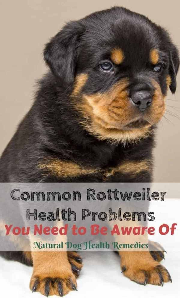 Common Rottweiler Health Problems Dog Breeds Rottweiler Dogs