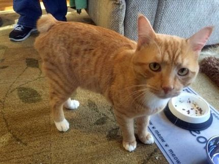 Handsome Bobby Cat Would Love Nothing More Than To Be Loved By You Greenville Sc Cat Adoption Dog Adoption Cat Help