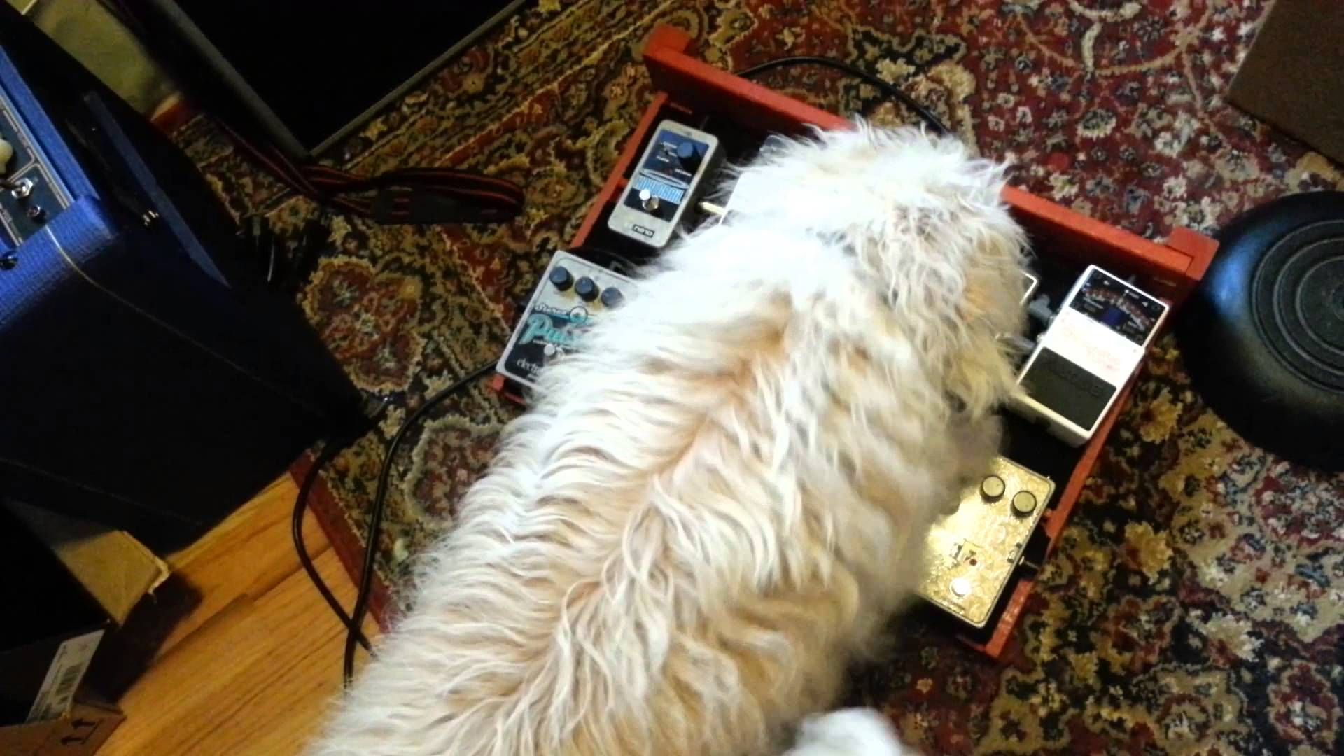 Pin by Lorm on Pedal Pets Pets, Dogs, Animals