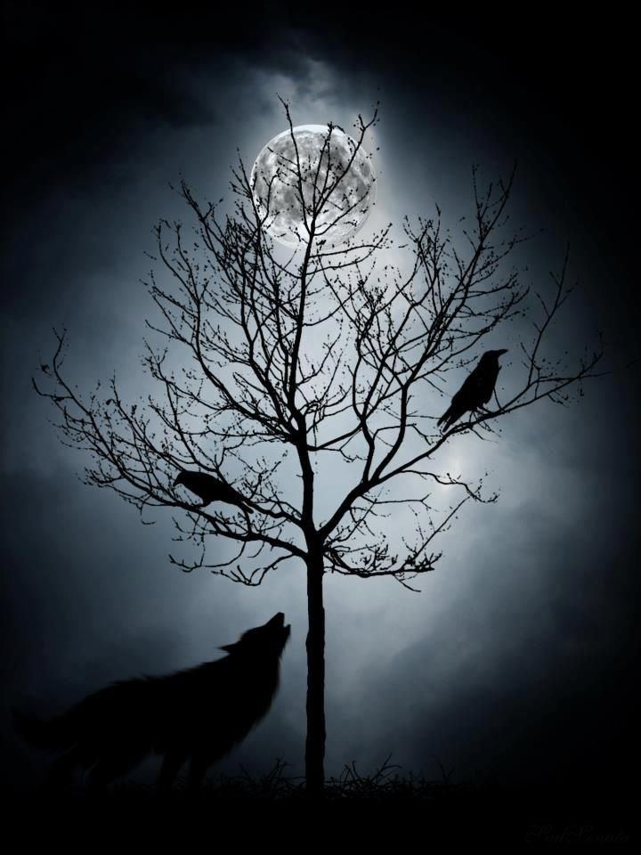 Wolf And Raven Full Moon Art Yahoo Image Search Results Raven And Wolf Wolf Tattoos Moon Art