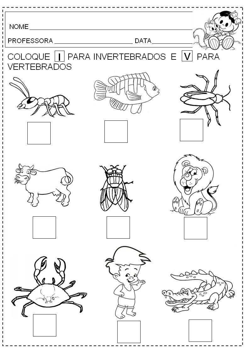 Animales Vertebrados E Invertebrados Para Colorear Imagui Boceto