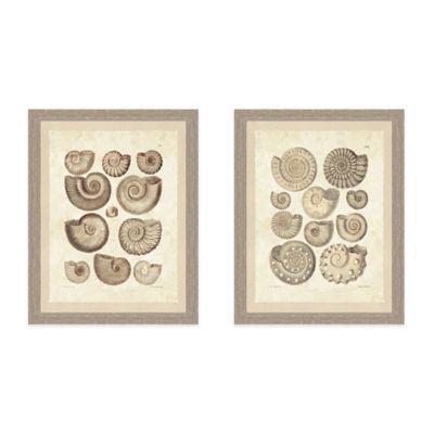Framed Giclee Brown Shell Print Wall Art - BedBathandBeyond.com