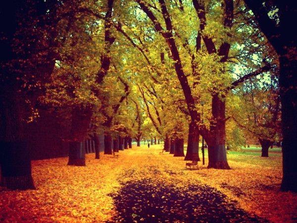 Autumnal Melbourne On Twitpic Melbourne Beautiful Places Autumn