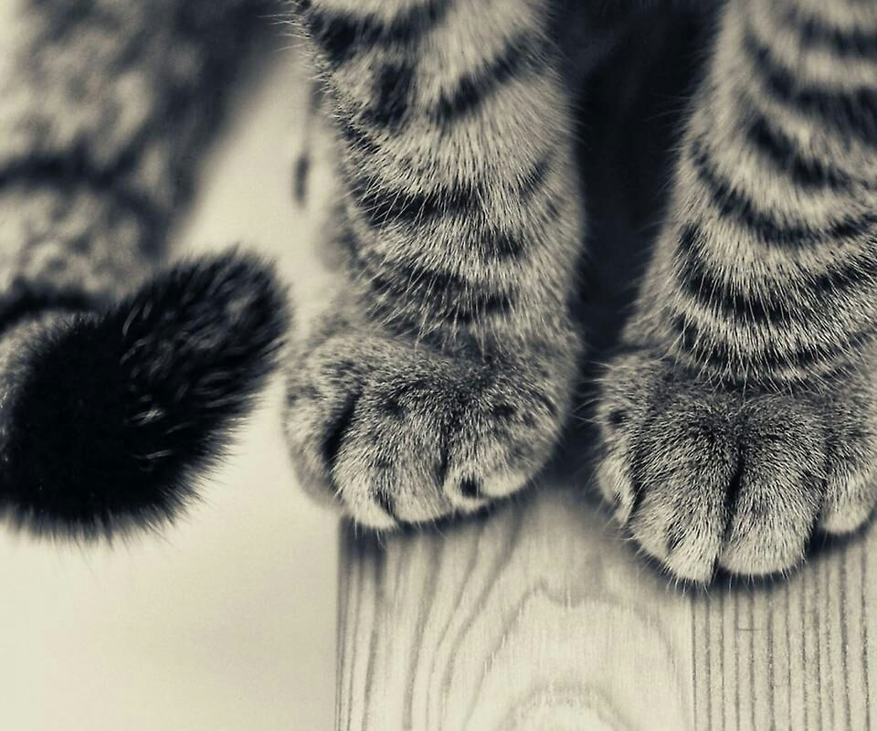 Katzenpfoten Katzen Tapeten Tier Wallpaper Katzen
