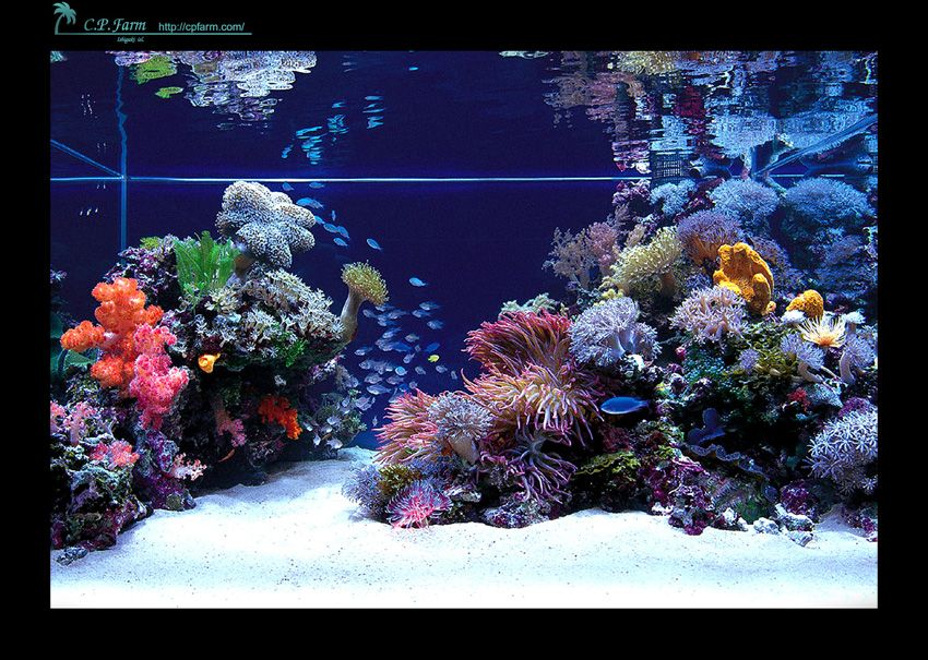 this photo was uploaded by nhatton14 great idea for rock placement rh pinterest com saltwater aquarium designs saltwater aquarium design ideas