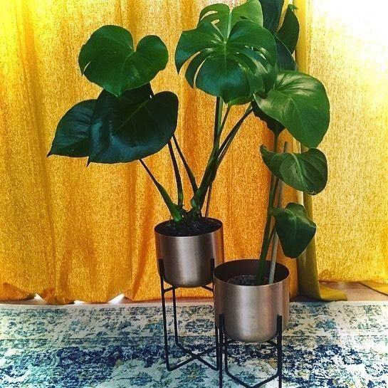 2 x Salix Übertopf, Messing | MADE.com