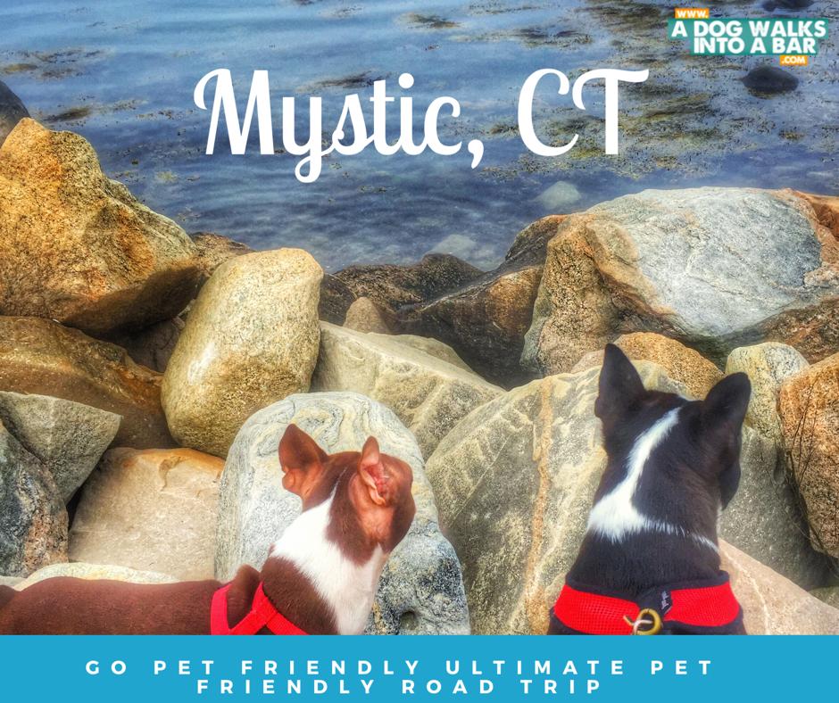 Dog Friendly Travel Free Slush Puppy Recipe Giveaway Dog Friends Dog Rescue Stories Dog Logo Design