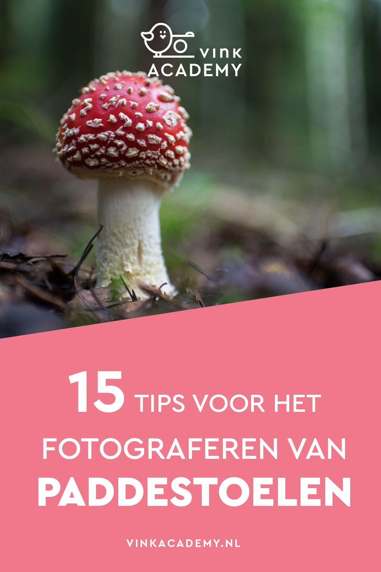15 Tips Voor Het Fotograferen Van Paddestoelen Vink Academy