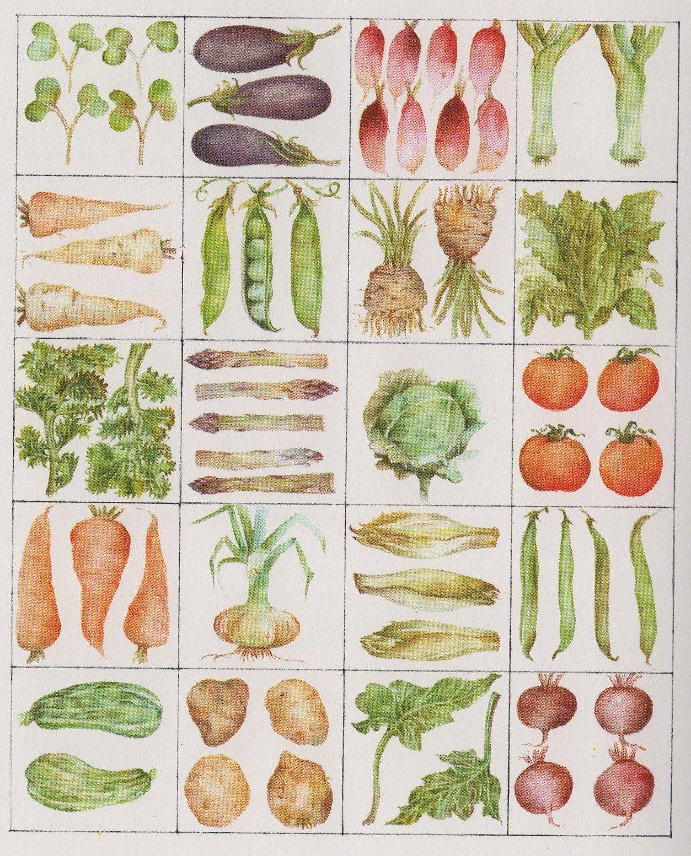 sara midda | eat your veggies! | pinterest | 野菜イラスト