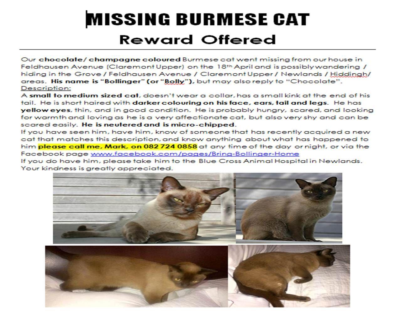 Bollinger's Missing Poster Burmese cat, Missing posters