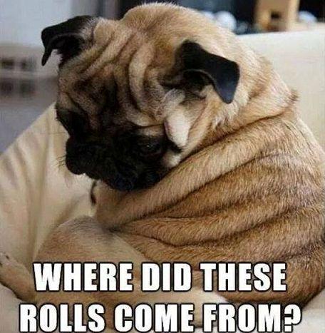 Funny Pug Dog Meme Pun Lol Cute Pugs Funny Animals Pugs