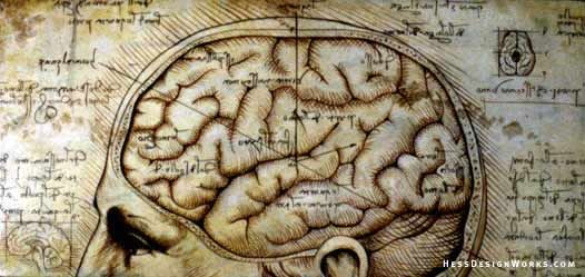 neuromorphogenesis: Scans that prove Leonardo da Vinci was right all along: New show reveals 'startling accuracy' of anatomical sketches wh...