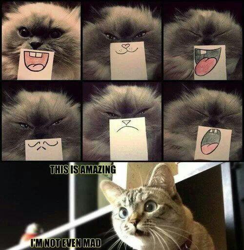 #kittyfaces