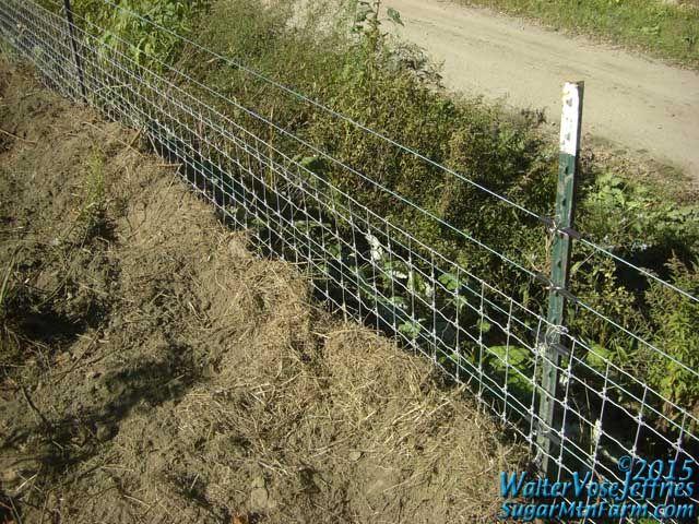 Pig Proof Fence | Sugar Mountain Farm