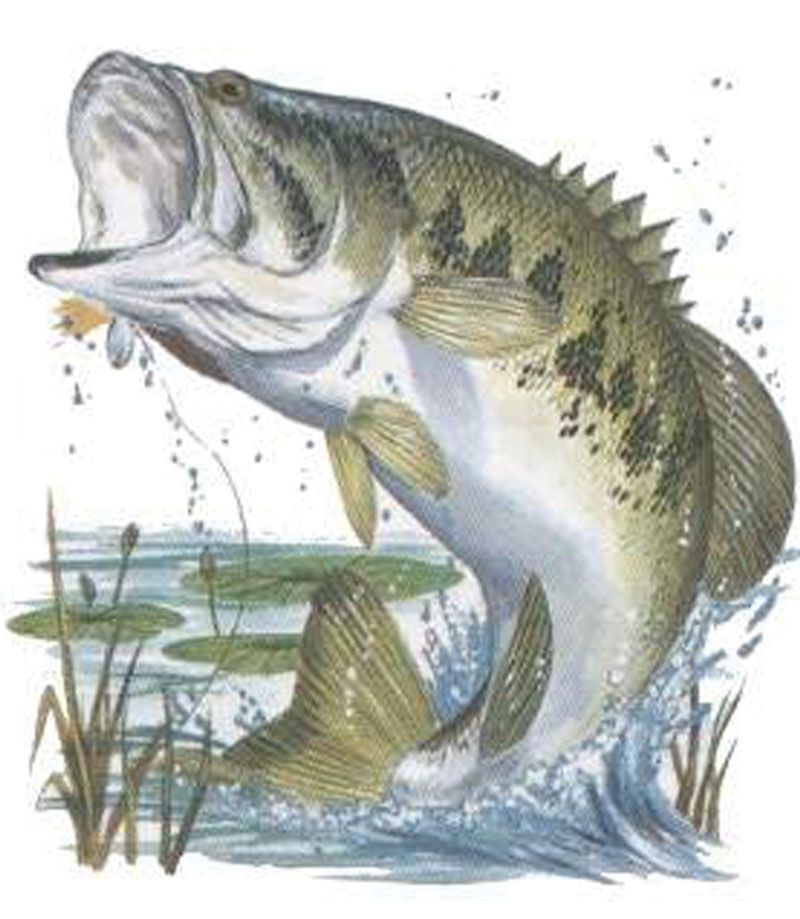 Bass fish jumping bass jumping fishing pinterest for Outside fish