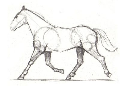Drawing Lesson For Beginner Artists The Proportions Of A Horse