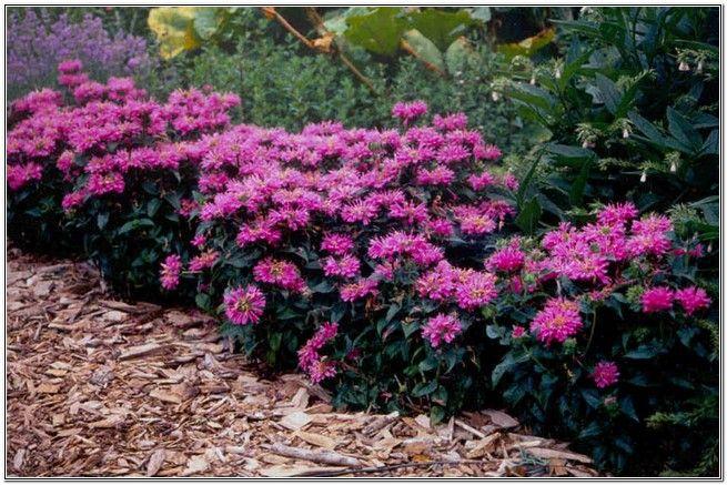 Flower Garden Ideas Full Sun tall perennial flowers full sun | flowers and grasses | pinterest