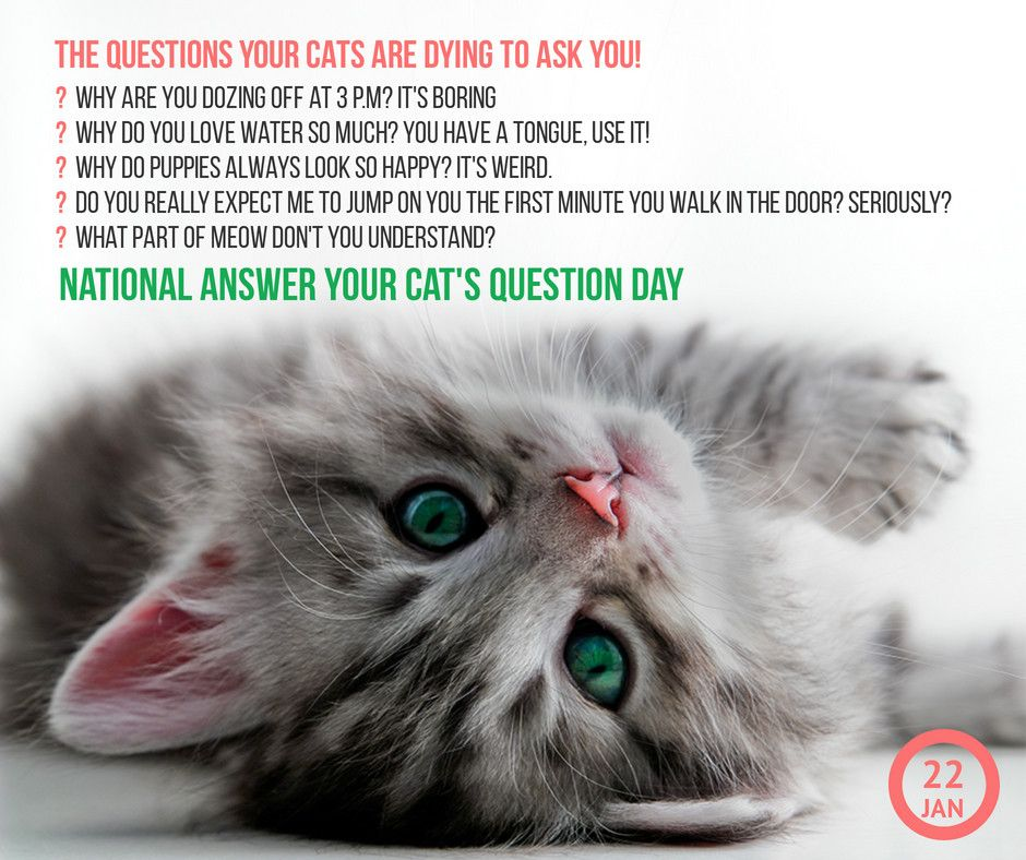 Cat Questions In 2020 National Cat Day Cat Questions Cats