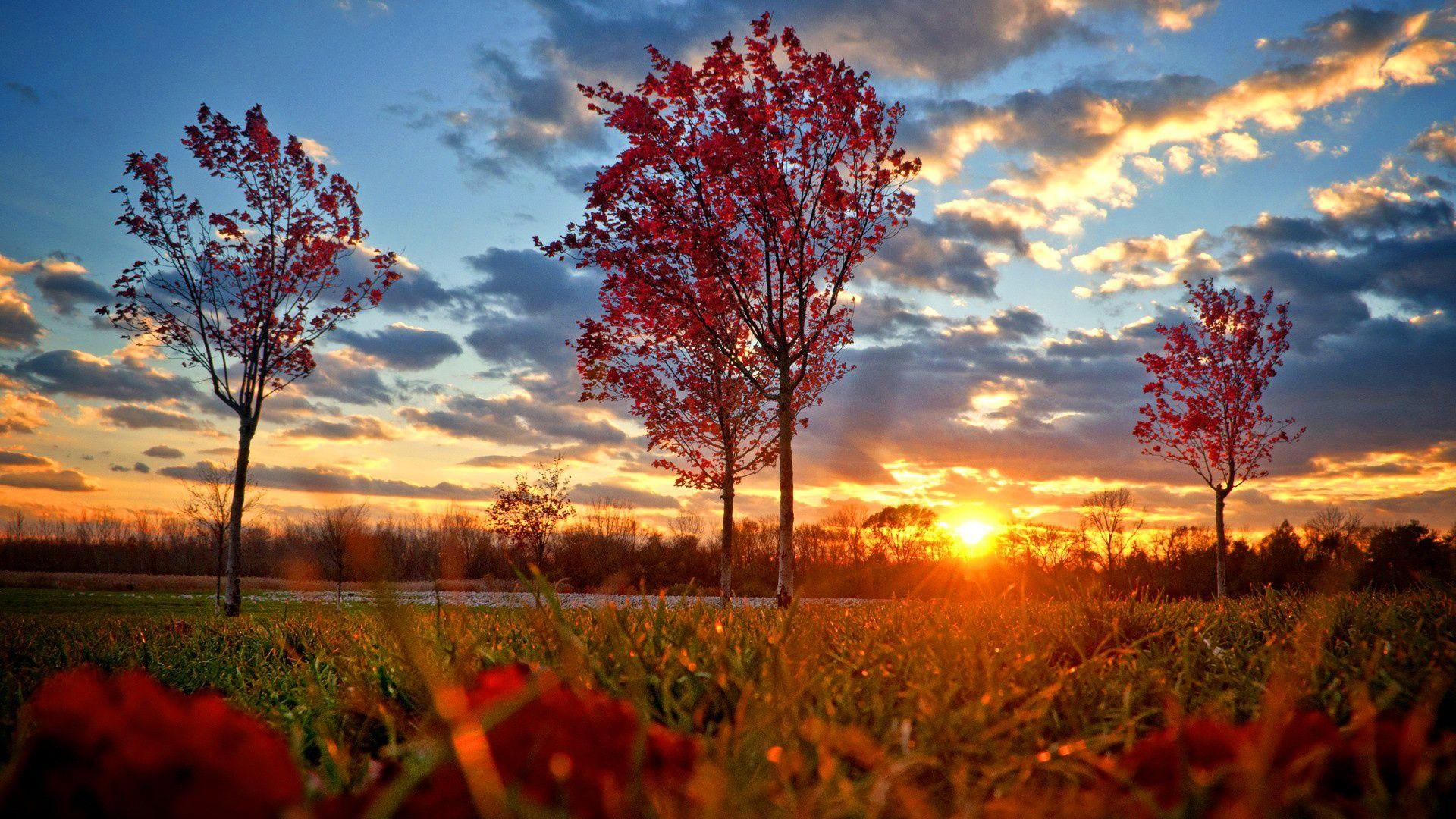 1920x1080 Red Autumn Sunset Wallpaper Sunset Wallpaper Autumn Wallpaper Hd Autumn Trees