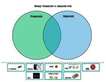 Prokaryotic Vs Eukaryotic Cells Venn Diagram Eukaryotic Cell Venn Diagram Sorting Activities