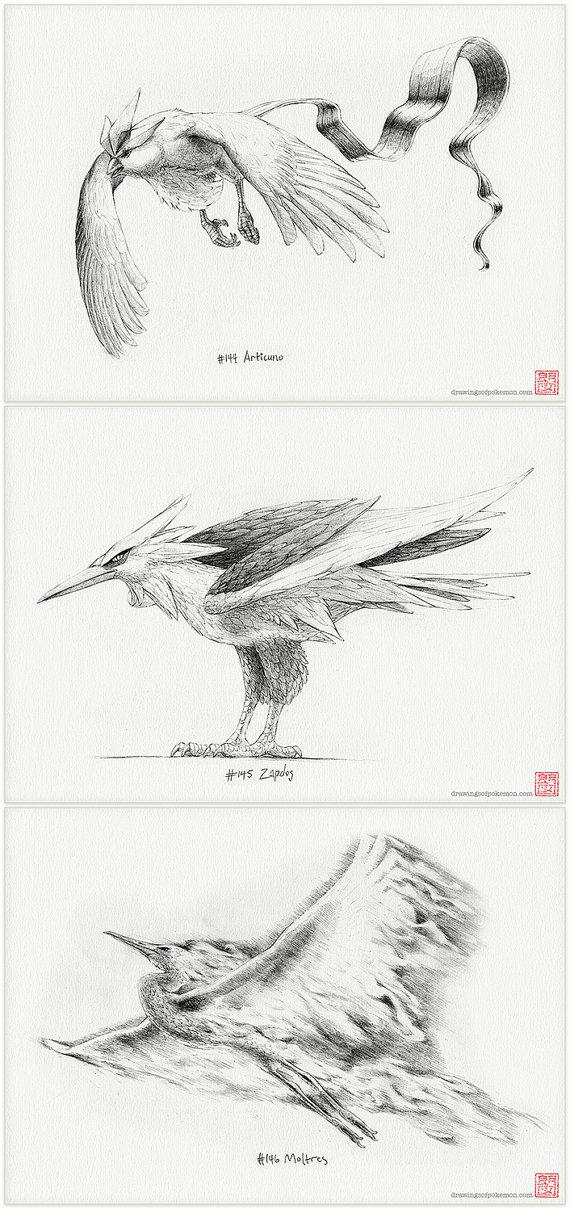 Legendary bird trio Pokémon set of three A4 by DrawingsofHeroes ...