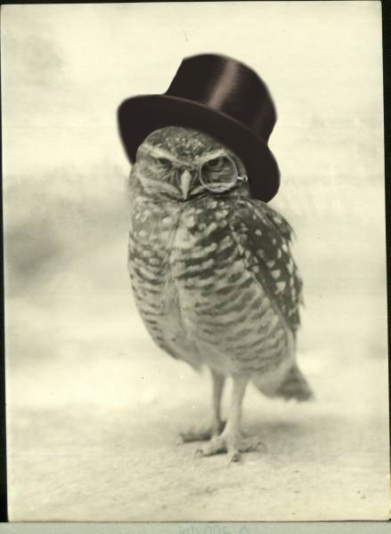 On a whim I searched for this guy this morning and sure enough someone has put a top hat and monocle on an owl and photographed it.  Insanely cute.  I really want an owl right now.