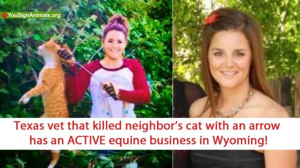 Texas Vet That Hunted NeighborS Cat Has An Active Equine Business
