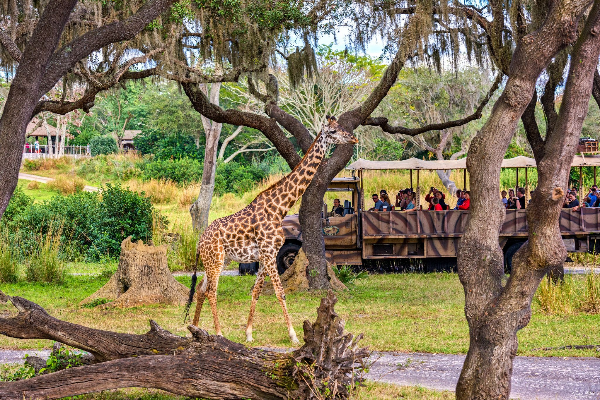 """https://flic.kr/p/KjPH9C 