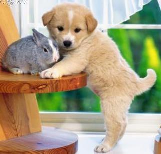 le lapin et le chien