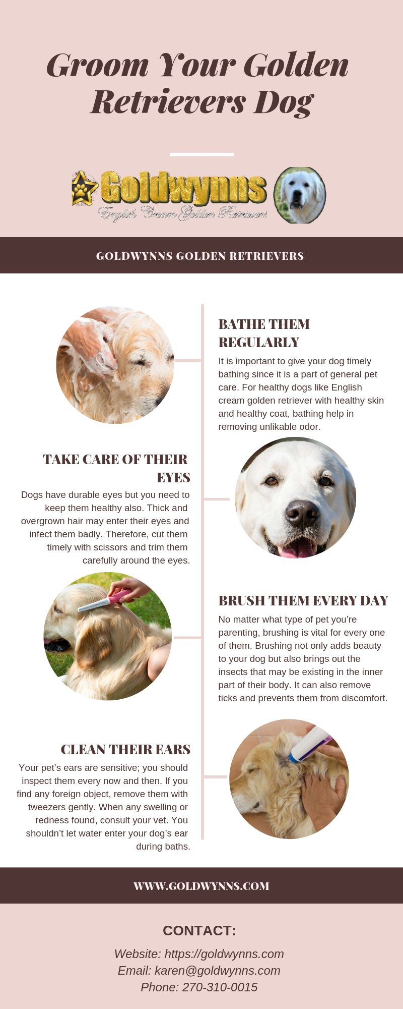 Pin By Goldwynns On English Cream Golden Retriever Puppies