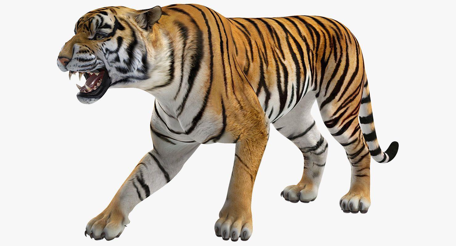 3D model tiger roar Tiger roaring, 3d model, Animal drawings