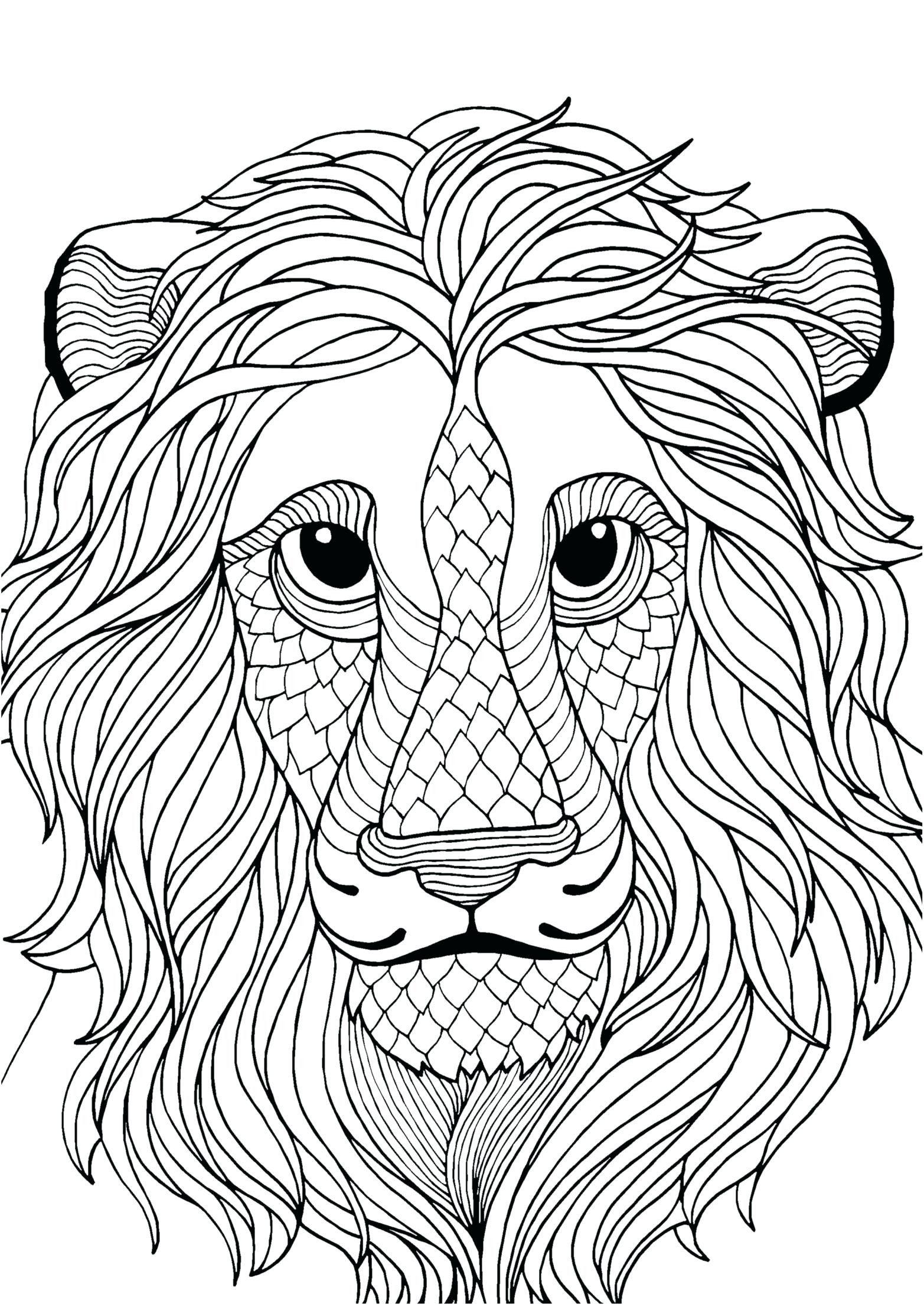 Mountain Lion Coloring Page Youngandtae Com En 2020 Colores