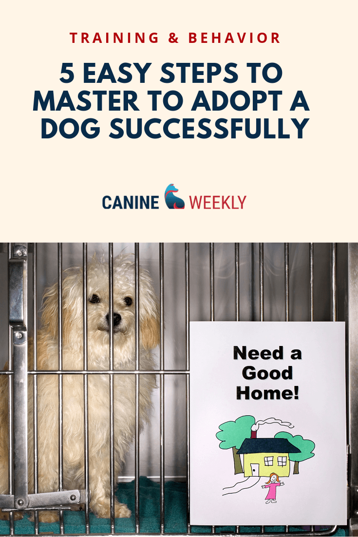 How To Adopt A Dog In 5 Easy Steps Dog Adoption Dog Paw Care Dog Skin Care