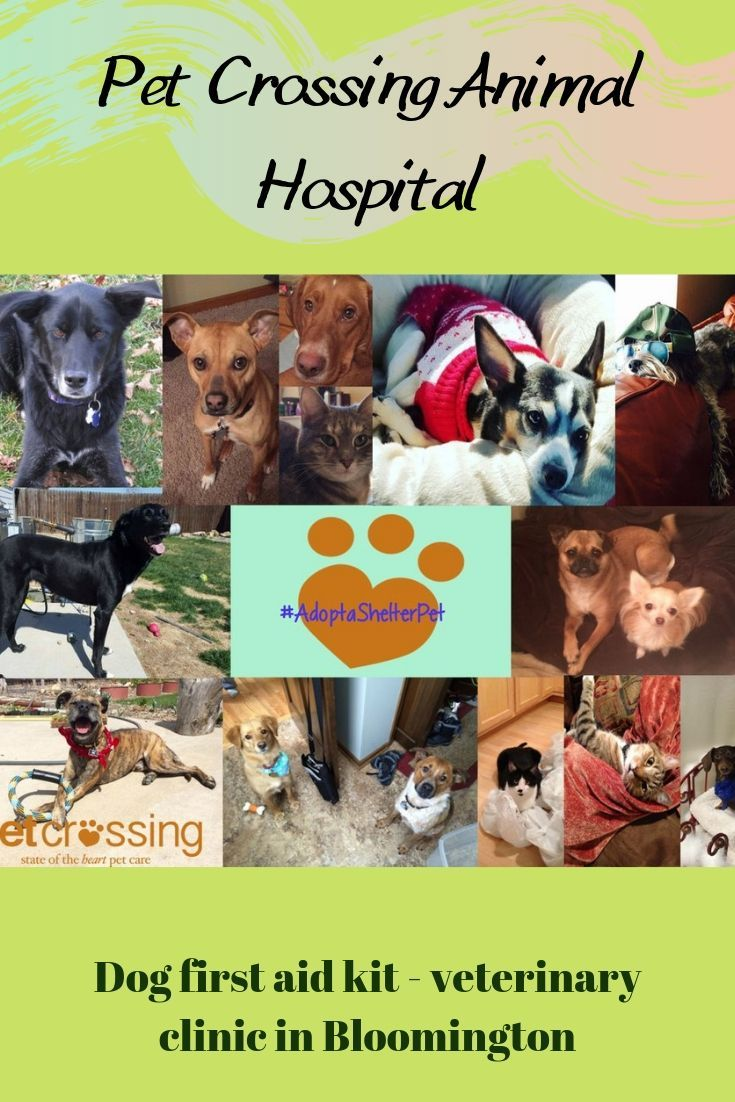 Pet Crossing Animal Hospital (With images) Cat health