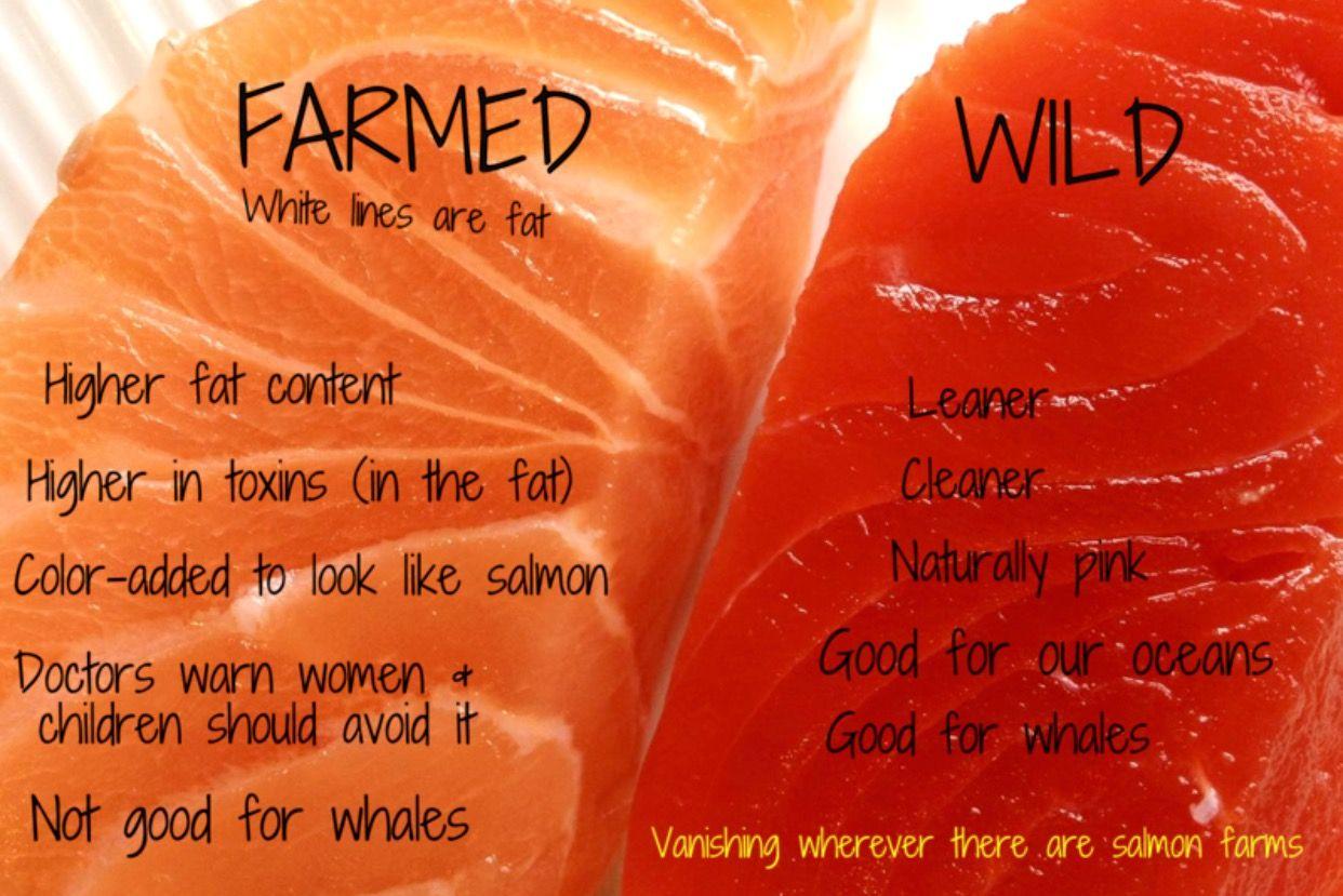 Wild Caught vs. Farmed Fish forecast