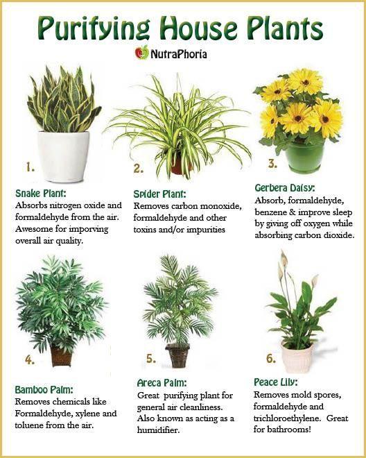 air purifying indoor plants gardening plants indoor plants house plants. Black Bedroom Furniture Sets. Home Design Ideas