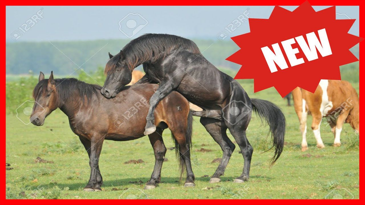 Two Male Horses Mating | just b.CAUSE