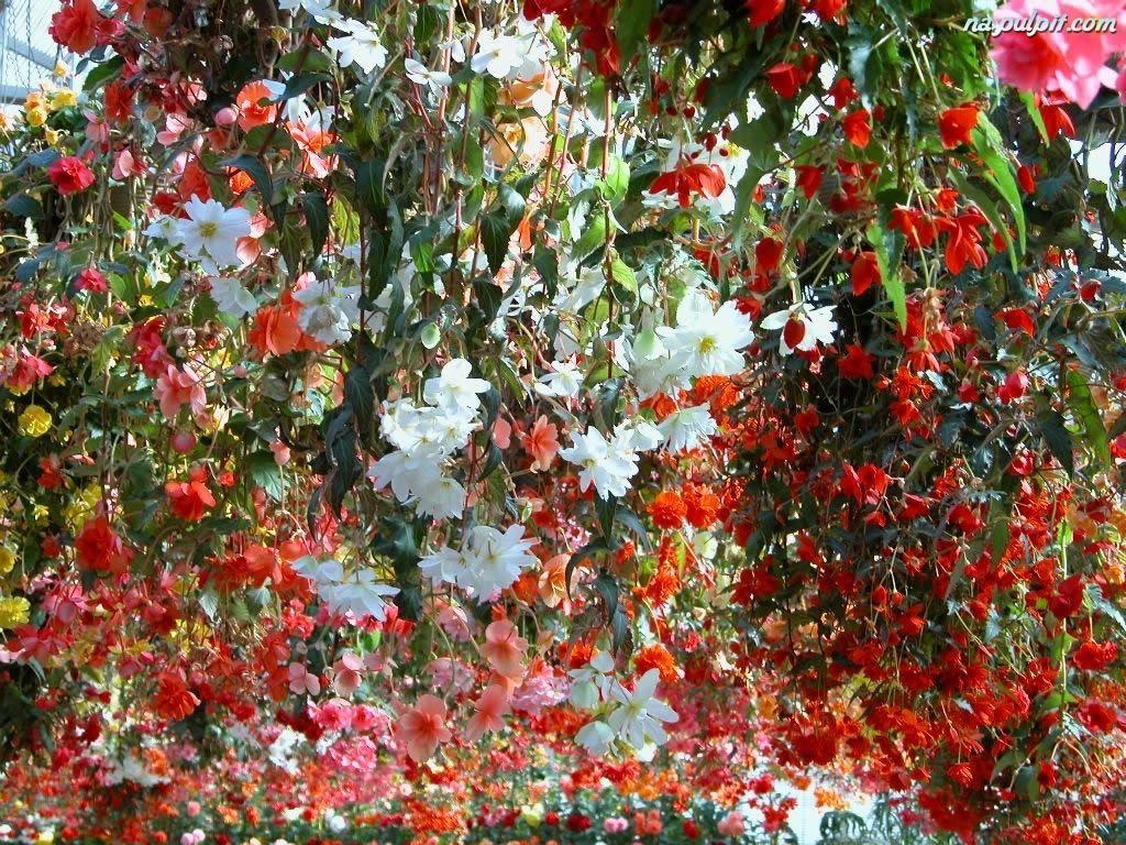 Botaniczny Kwiaty Wiszace Ogrod Na Pulpit Flowers Photo Effects Botanical