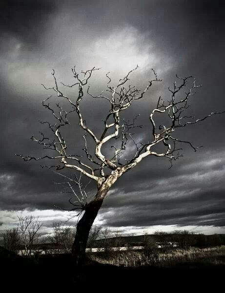 #Enchanted Nature