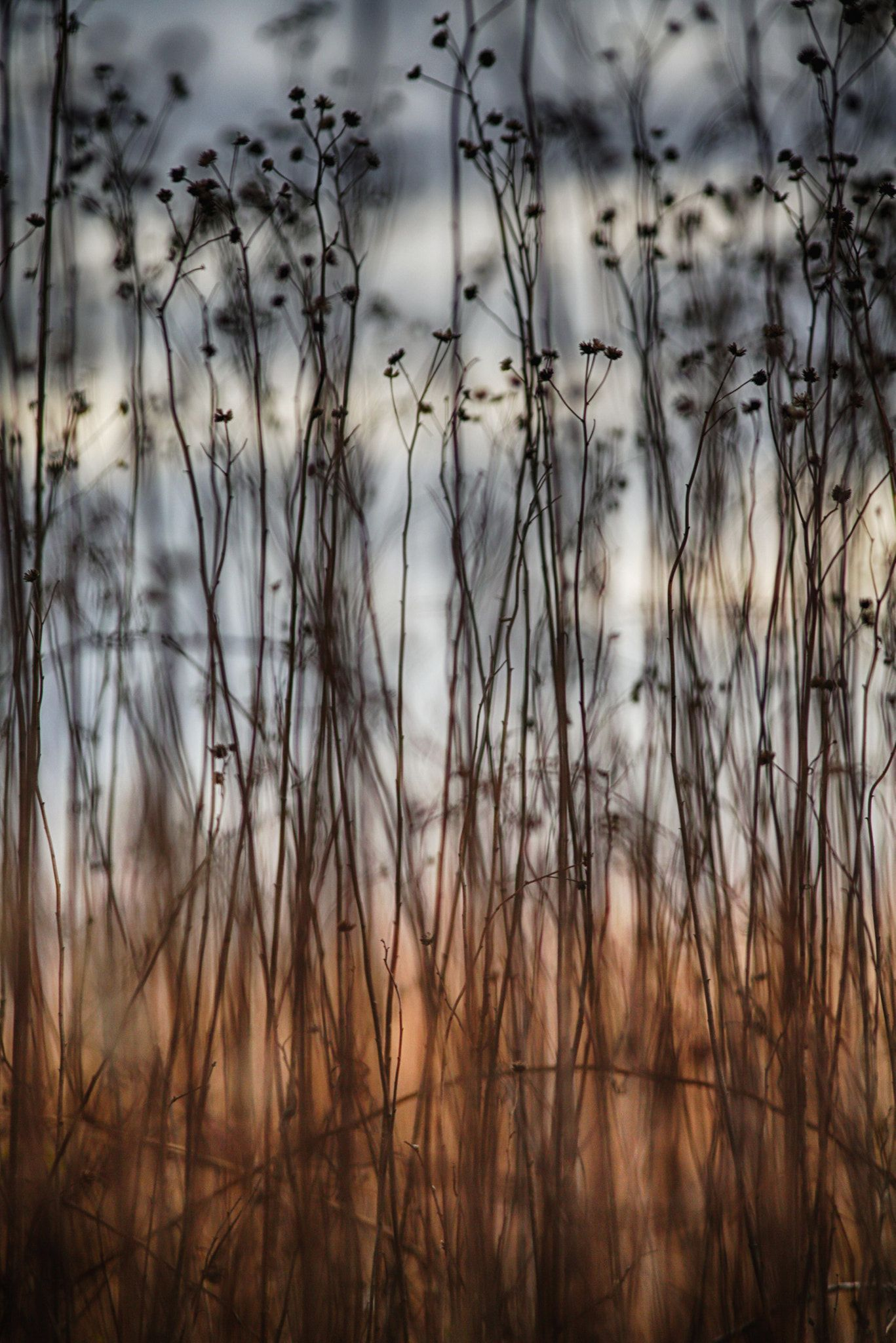 November Twilight >> November Sets In Twilight In Mid November In The Meadow At