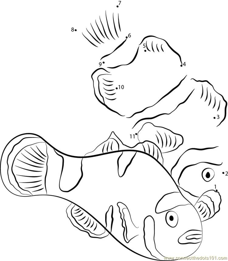 Kissing Clownfish Connect Dots Download Picture Coloring